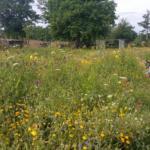 bijen en vlinders spotten en bloemen knippen