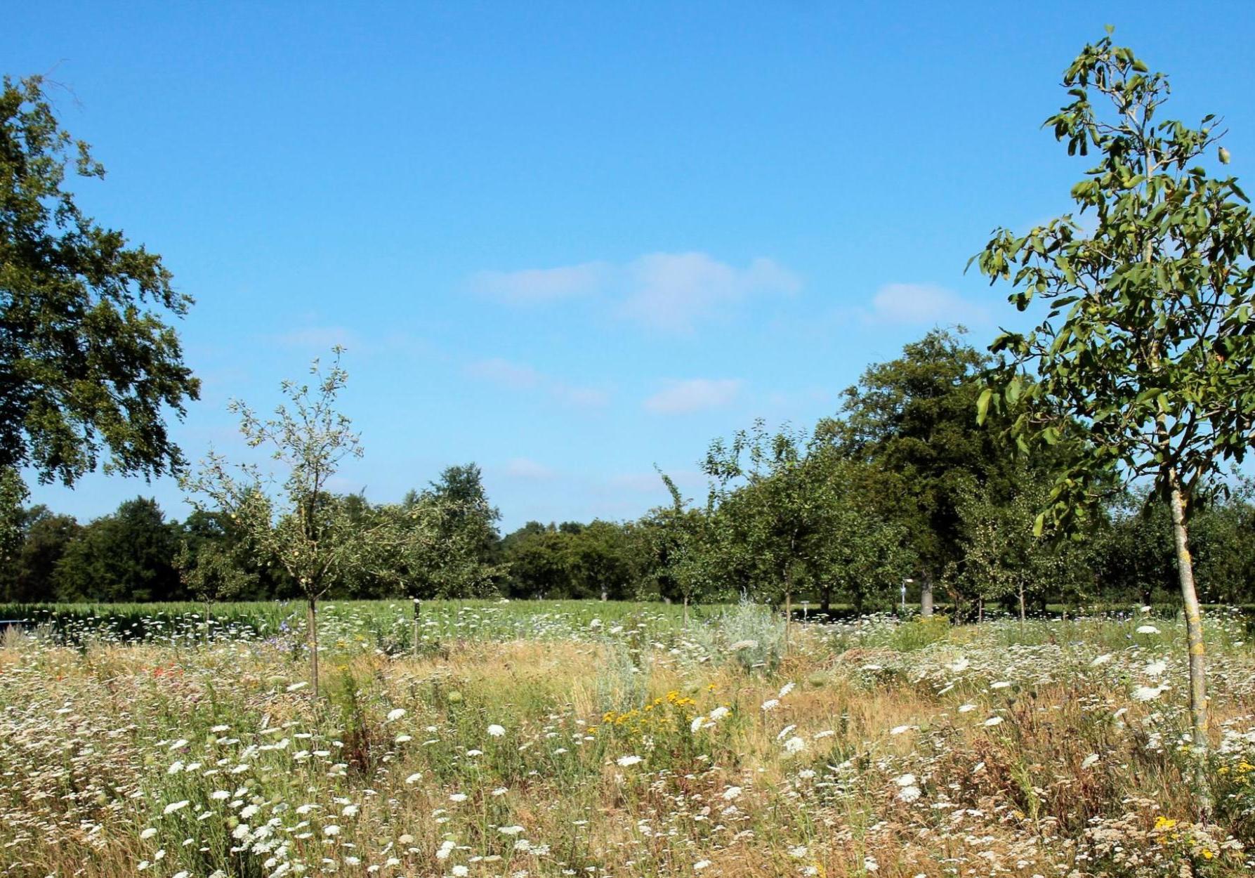bijenweide in boomgaard Robbie ten Thije